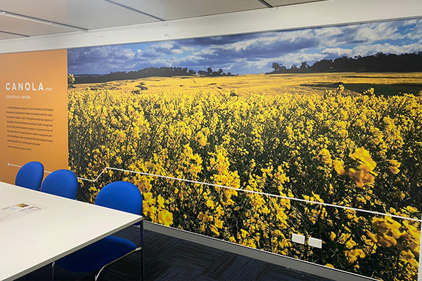 The Canola Room wallpaper at CSBPs offices in Perth