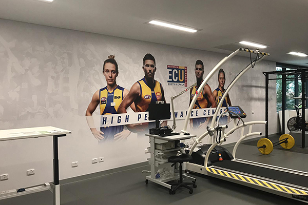 Wall graphics in the West Coast Eagles training room at ECU Perth